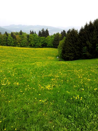 spring2013-1.jpg